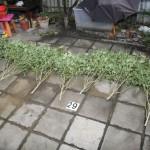 zajištěné rostliny 2