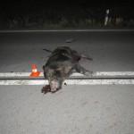 srazil kance, letěl 20 metrů vzduchem, foto PČR (1)